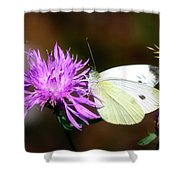 Cabbage Butterflies On Spotted Knapweed Shower Curtain