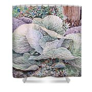 Cabbage Head Shower Curtain
