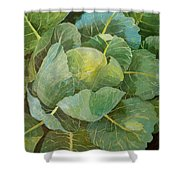 Cabbage Shower Curtain