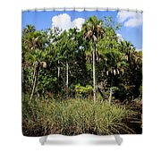 Cabbage Palms Along The Cotee River Shower Curtain