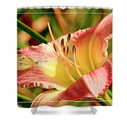 Cabbage White Butterfly On Day Lily Shower Curtain