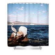 Cabo San Lucas Pelican Shower Curtain
