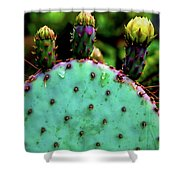 Cacti And Friends Shower Curtain