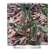 Cacti And Leaves Shower Curtain
