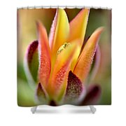Cacti Elegance Shower Curtain
