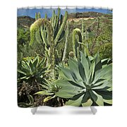 Cacti Of Koko Crater Shower Curtain