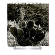 Cacti On Molokai Shower Curtain