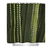 Cactus Abstract Shower Curtain
