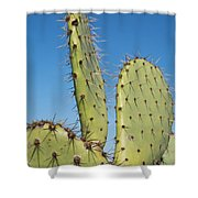 Cactus Against Blue Sky Shower Curtain