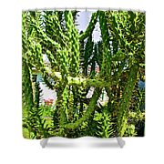Cactus At Pilgrim Place In Claremont-california  Shower Curtain