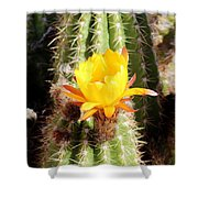 Cactus Bloom 033114a Shower Curtain