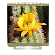 Cactus Bloom 033114d Shower Curtain