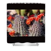 Cactus Bloom 033114g Shower Curtain