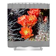 Cactus Bloom 033114j Shower Curtain