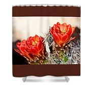 Cactus Bloom 033114m Shower Curtain