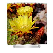 Cactus Bloom In Yellow 050715ab Shower Curtain