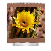 Cactus Bloom Yellow 050914a Shower Curtain