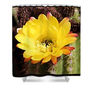 Cactus Blooms Yellow 050214k Shower Curtain