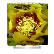 Cactus Blossom Open Shower Curtain