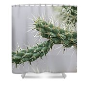 Cactus Branch With Wet White Long Needles Shower Curtain