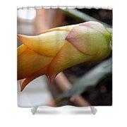 Cactus Bud Shower Curtain