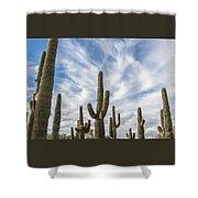 Cactus Choir Shower Curtain