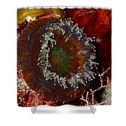 Cactus Coral Feeding At Night Shower Curtain