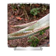 Cactus Cup Shower Curtain
