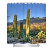 Cactus Desert Landscape Shower Curtain