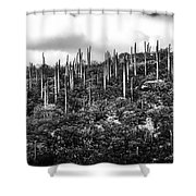 Cactus Field Shower Curtain
