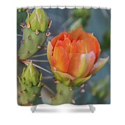 Cactus Flower And Buds Shower Curtain