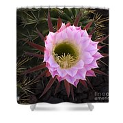 Cactus Flower Arizona 1 Shower Curtain