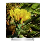 Cactus Flower H28 Shower Curtain