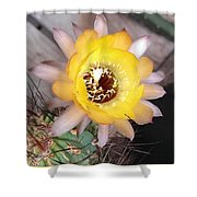 Cactus Flower Lobivia Shower Curtain