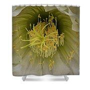 Cactus Flower Macro Shower Curtain
