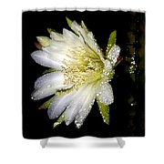 Cactus Flower Shower Curtain