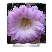 Cactus Flower Purple Shower Curtain
