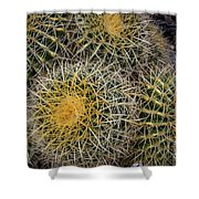 Cactus Hay Shower Curtain