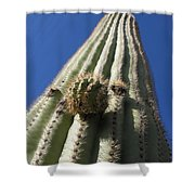 Cactus Height  Shower Curtain
