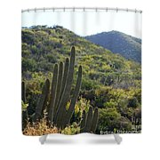Cactus In The Desert  Shower Curtain