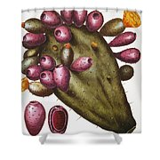 Cactus: Opuntia, 1613 Shower Curtain
