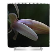 Cactus Peach Shower Curtain