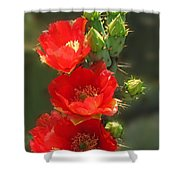 Cactus Red Beauty Shower Curtain