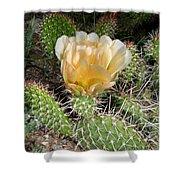 Cactus Rose Shower Curtain
