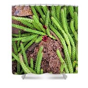 Cactus Splendor Shower Curtain