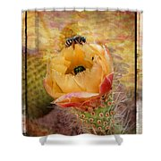 Cactus Spring Beauty W Frame Shower Curtain