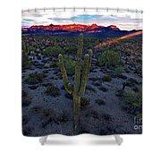 Cactus Sun Beam Shower Curtain