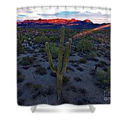 Cactus Sun Beam Shower Curtain