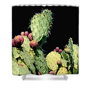 Cactus Two Shower Curtain