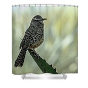 Cactus Wren 0295 Shower Curtain